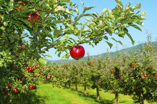Image of blog post Refugee education: start by picking low-hanging fruit